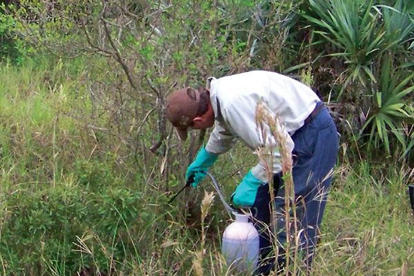 Invasive Plant Control