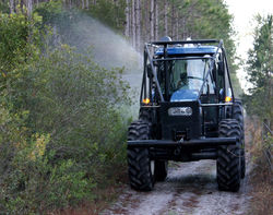 vegetation management services